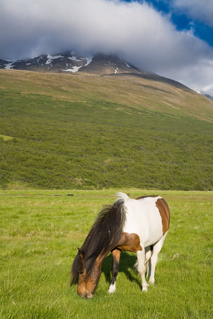 Horse eats grass before and mountain wrapped in clouds in Icelan