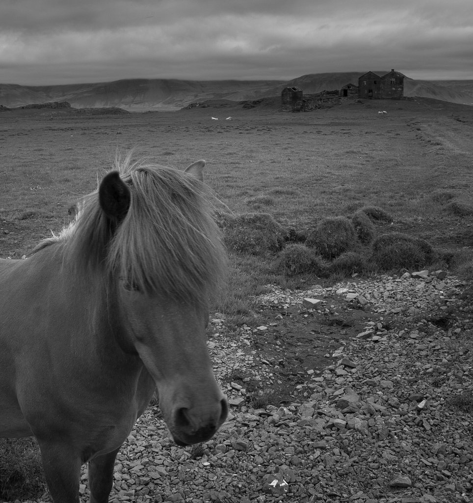 Black and white image of Icelandic horse and ruins