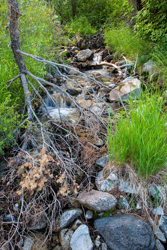 Mountain spring near my land in the San Luis Valley of Colorado