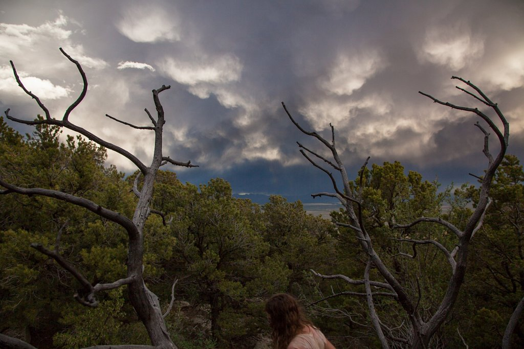 Ginger dead branches and stange clouds in the Sangre de Christo