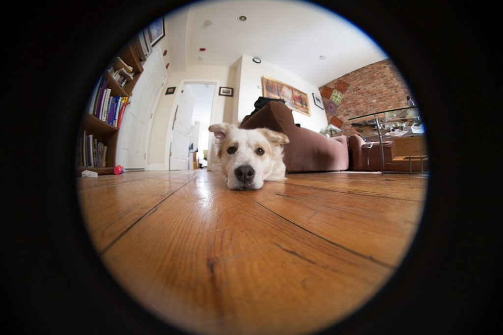 Shanti Dog in the fisheye lens on the floor