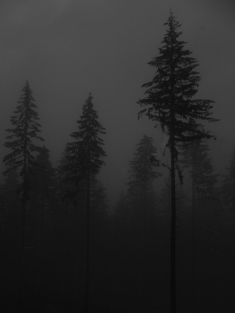 Pine trees at the edge of a clearcut on the Olympic Peninsula of