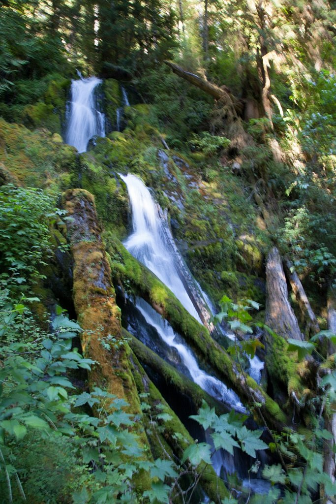 Waterfall in the Olympic Peninsula in the Temperate rainforest o